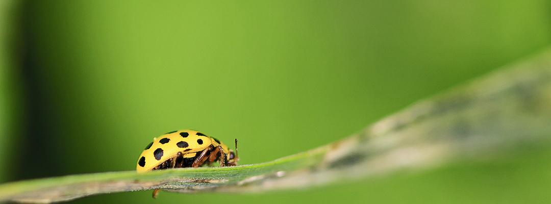 Insecte vazute prin lentile macro