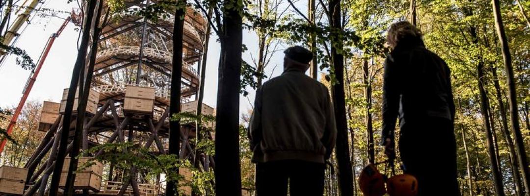 Turnul de lemn din mijlocul pădurii