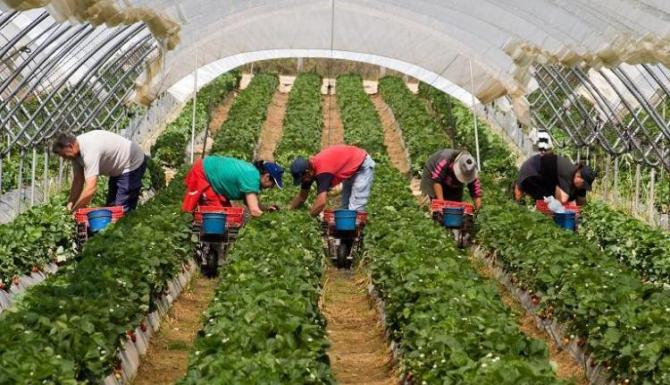 Fermierii afectați de secetă vor primi compensări
