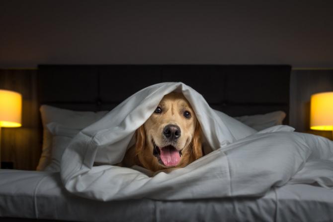 Sute de câini si pisici vor beneficia de liniște de Revelion