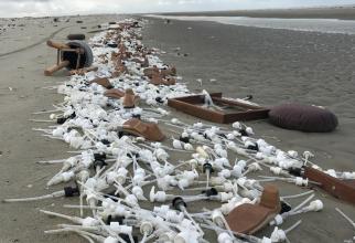 Insula Schiermonnikoog este cea mai afectata