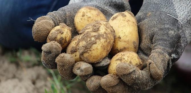 Cartofii și legumele, în capul listei