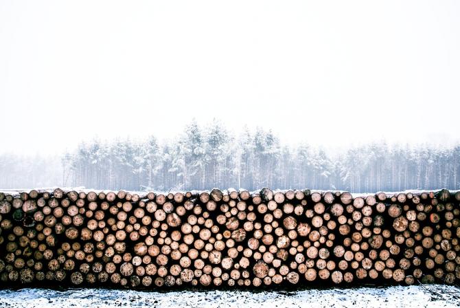 Consiliul Concurenței mai are deschise două investigații în industria lemnului