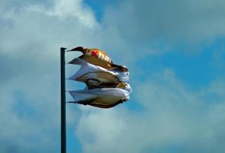 Vant puternic. ANM precizează că în județele Olt, Dolj și Mehedinţi se vor înregistra intensificări ale vântului cu viteze la rafală de 55...65 km/h.