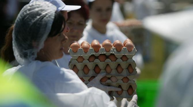 Ouă contaminate cu fipronil