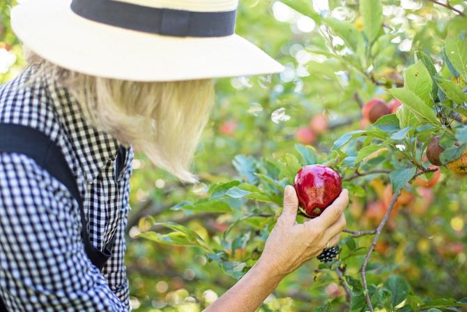 Cules de fructe in Spania