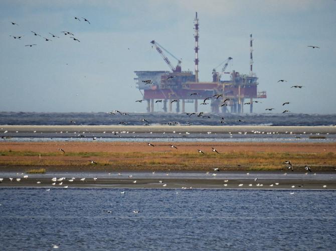 ompania Black Sea Oil & Gas (BSOG) a luat decizia de a investi în producţia de gaze