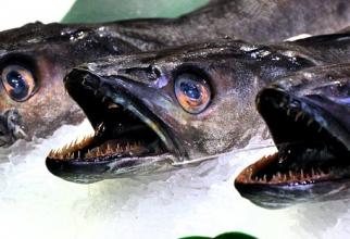 Se fac recomandări despre cum arată peștele