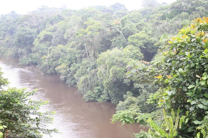 Densitatea pădurii ecuatoriale i-a salvat pe pasageri