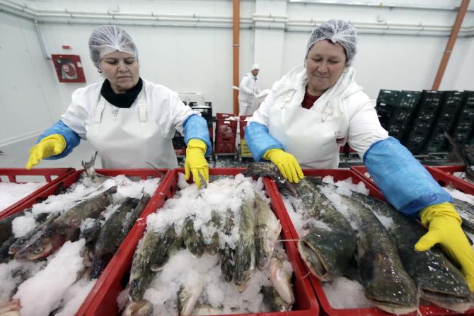 Bursa de Pește din Tulcea