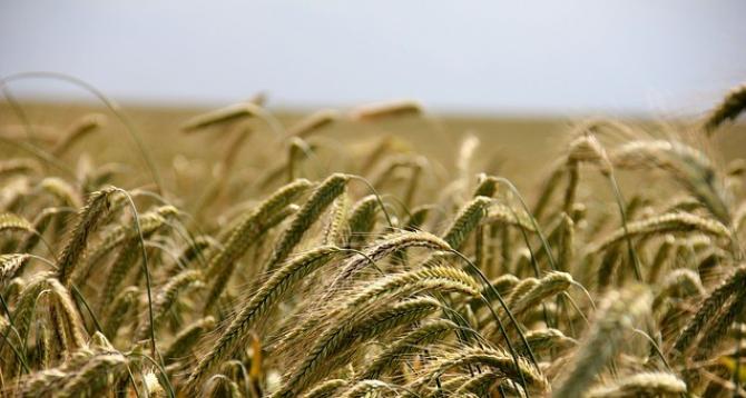 Exporturile de cereale au crescut