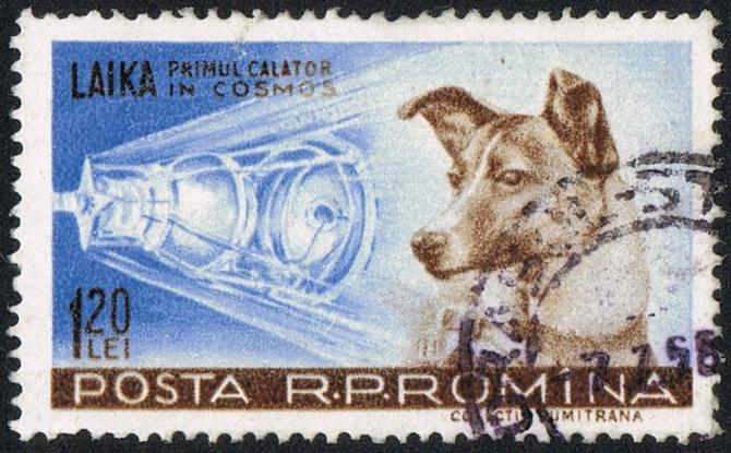 Timbru al Poștei Române din 1959 care o celebrează pe Laika