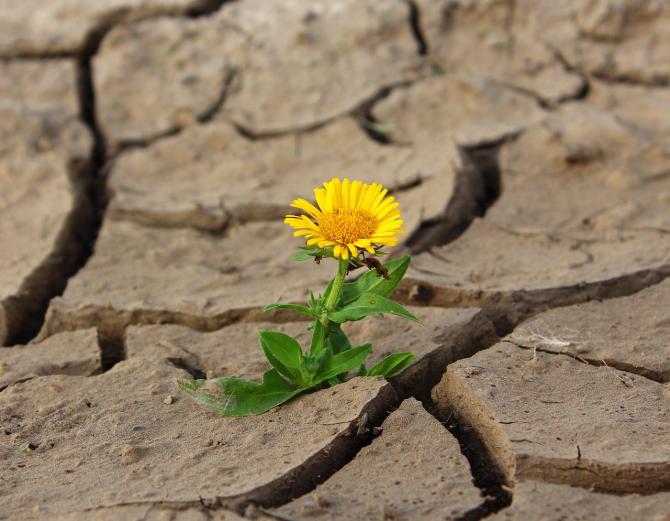 ANM: Seceta afectează noul an agricol
