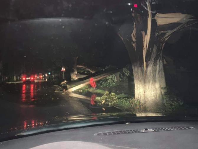 Copaci rupti si scosi din radacini pe o strada din Corabia