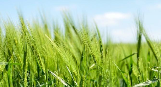Un ajutor substantial care ar trebui sa îi încurajeze pe fermieri