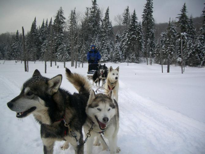 Dogul eschimos canadian