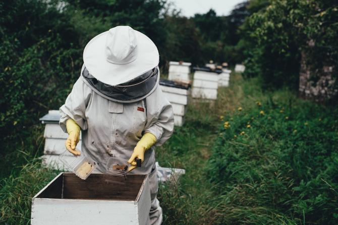 România produce cea mai multă miere din Europa