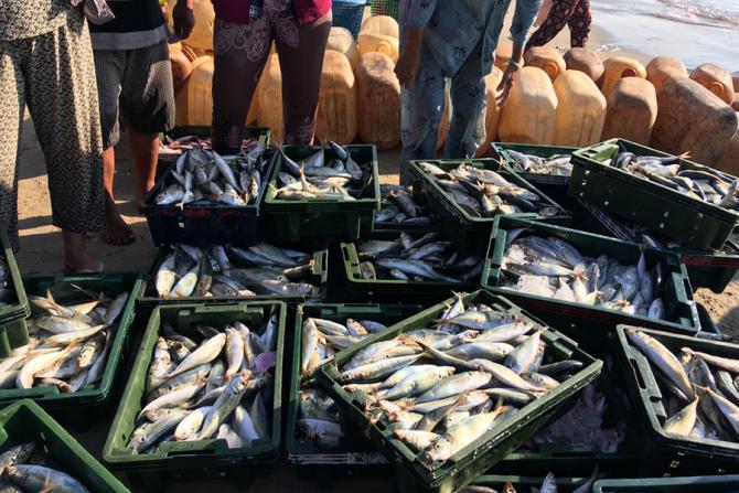 30 de tone de pește au fost confiscate