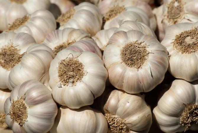 Ajutorul de stat pentru cultivatorii de usturoi se majorează
