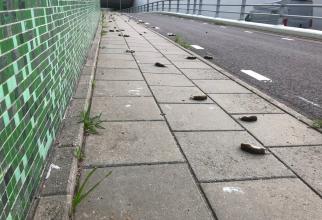 Soareci de câmp morți pe caldarâmul pasajului