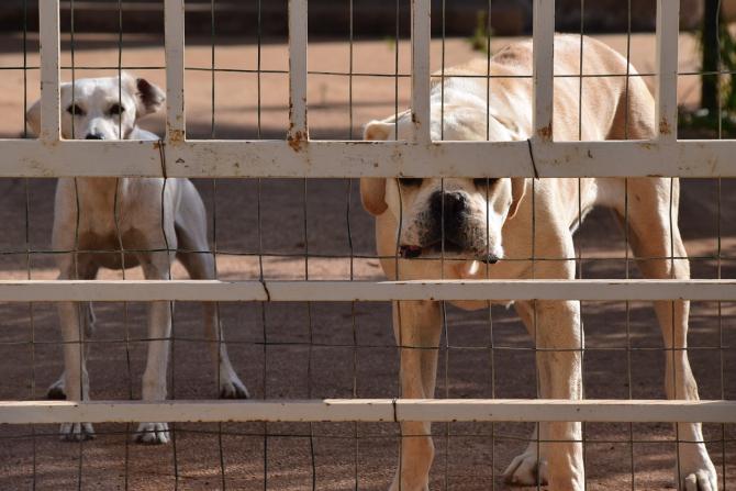 Stapanii câinilor periculoși sau agresivi risca amenzi uriașe dacă îi plimbă fără botniță și lesă