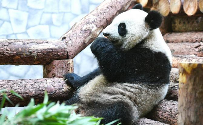 Vladimir Putin și Xi Jining au vizitat grădina zoologică din Moscova