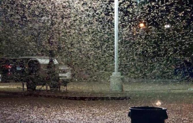 Invazie de lăcuste în Las Vegas