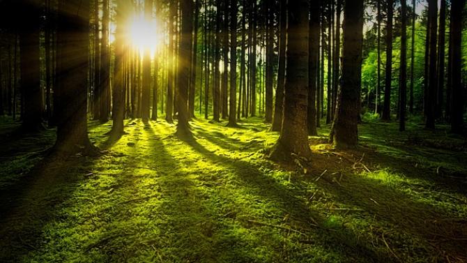 Cea mai amplă campanie de împădurire a terenurilor degradate în vederea protejării solului