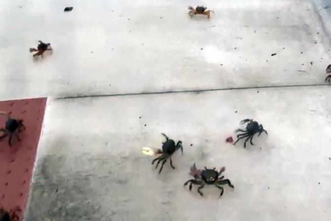 Consumatorii chinezi se înghesuie să cumpere cutii cu crabi