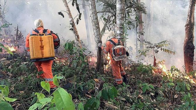 Incendiile din pădurea amazoniană au stârnit multă emoție
