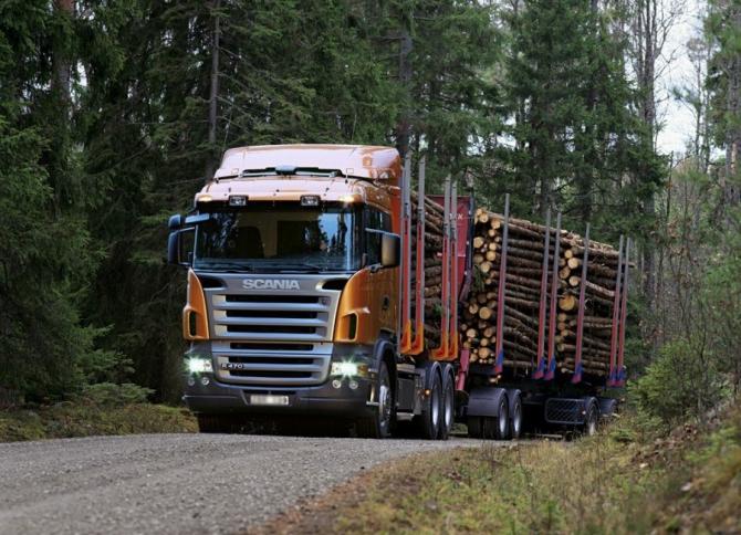 România își pierde în continuare pădurile