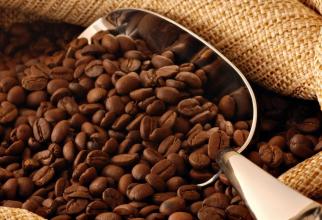 Producția de cafea din Brazialia, periclitată de îngheț