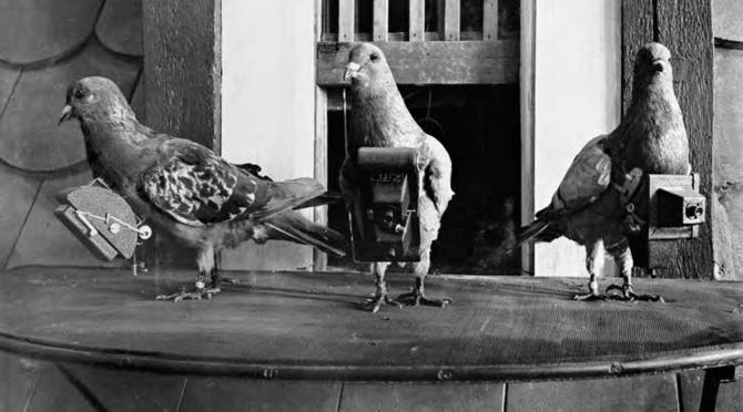 Porumbei dotați cu camere foto