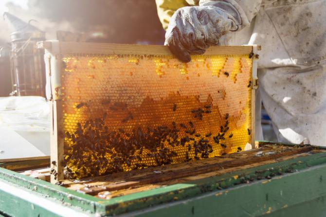 Targul mierii are loc in fiecare an / Foto: freepik.com