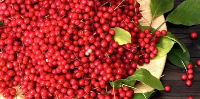 Planta medicinală care îți aduce 100.000 de euro la hectar