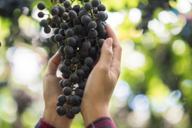 Producătorii de vin ar trebui să se organizeze împreună