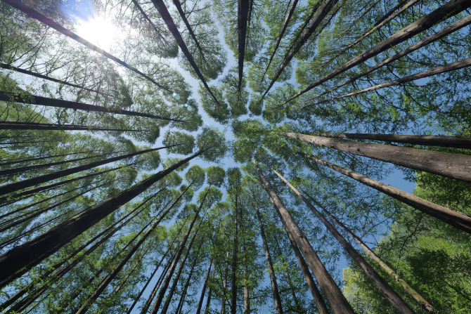 Cererile de sprijin pentru prima împădurire începe curând
