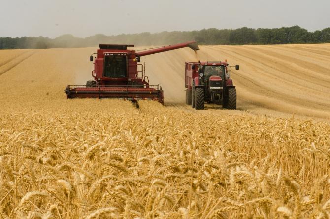 Marea Britanie, pierdere uriaşă în agricultură. Aproape 40 la sută din recolta de grău, ARUNCATĂ