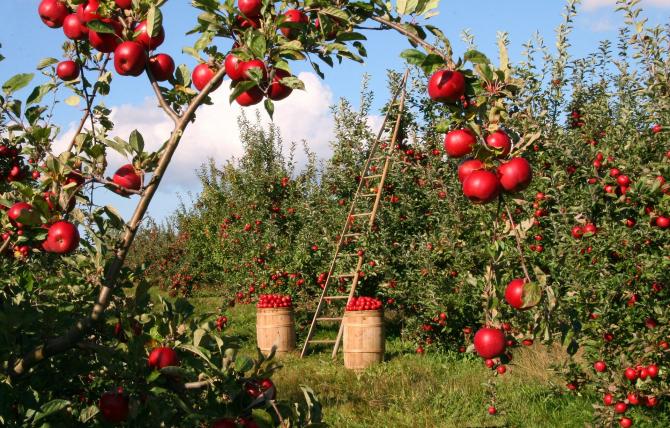 România, livada de fructe a Europei