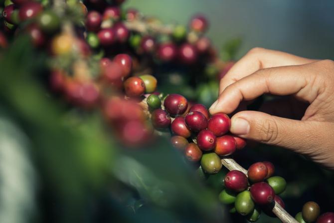Uniunea Europeană importă masiv cafea / Foto: freepik.com