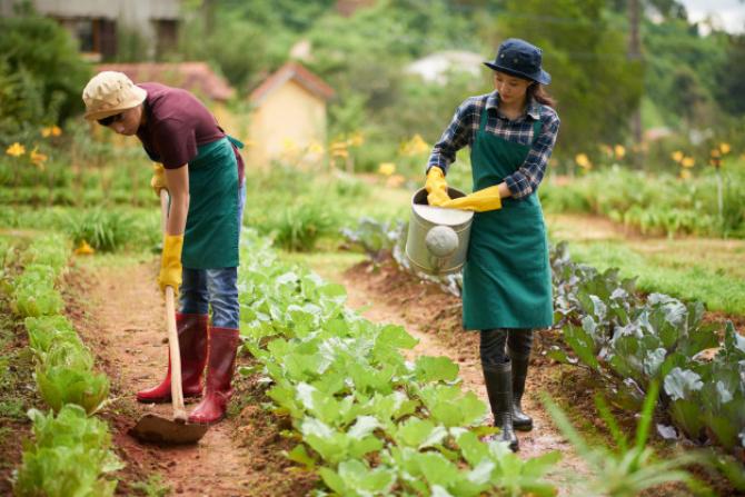 De cele mai multe ori, fermele bio sunt amplasate în zone izolate