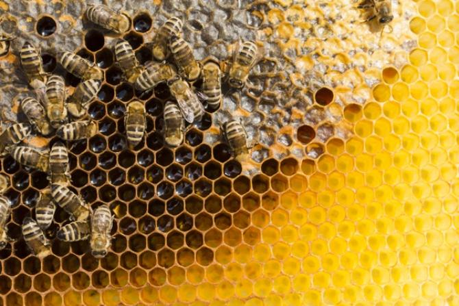 Creșterea albinelor este o afacere cu potențial