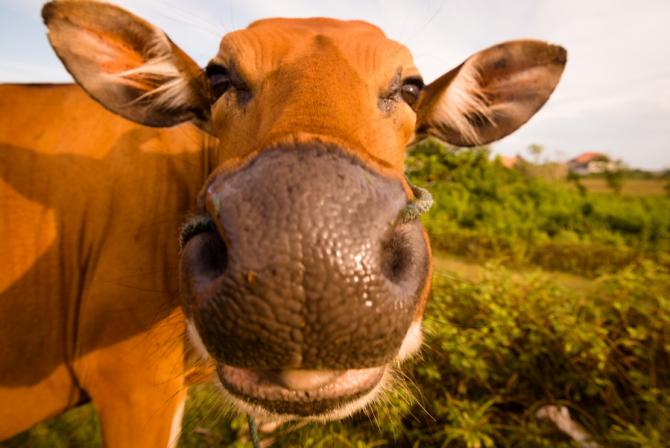 Cute de vite au murit pe câmpurile cu eoliene / Foto> freepik.com