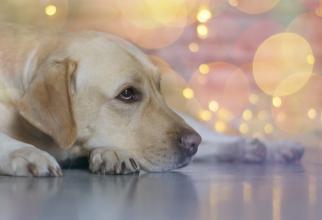 """Teoria potrivit căreia un """"an câinesc"""" reprezintă echivalentul a şapte ani umani este un mit"""