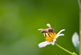 Crescătorii de albine din judeţ care au solicitat ajutorul de minimis acordat