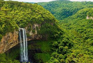Următoarea pandemie ar putea veni din pădurea amazoniană