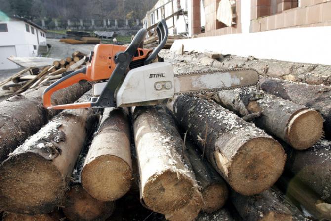 Afacerile din domeniul exploatărilor forestiere şi prelucrării lemnului din România vor atinge în 2019 cel mai ridicat nivel din istorie