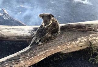 Incendiu de vegetație, fără precedent în Australia, a ucis sute de milioane de animale