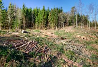 Comisia Europeană a trimis miercuri României o scrisoare de punere în întârziere şi îndeamnă România să pună în aplicare în mod corespunzător Regulamentul UE privind lemnul