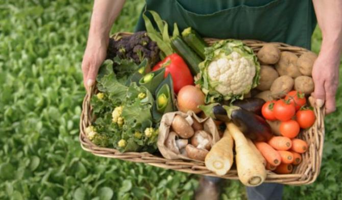 Exporturile de produse agricole ale Olandei au crescut cu 4,6% în 2019